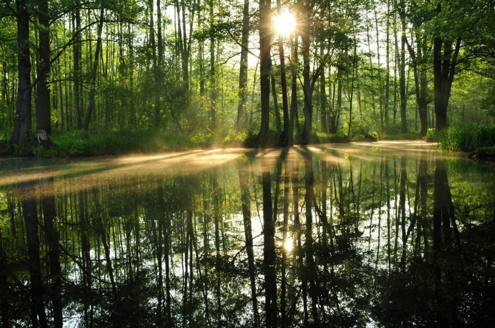 Sonne scheint durch den Spreewald