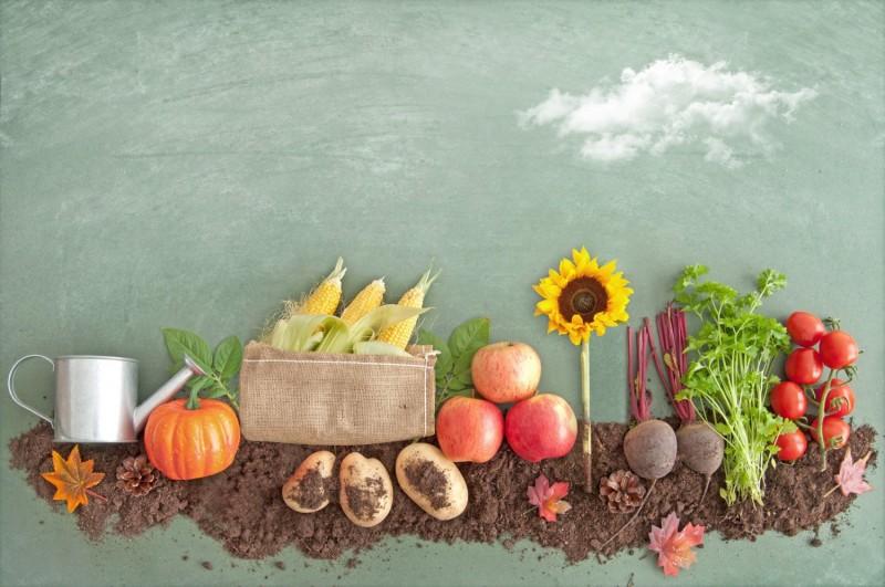 Leidenschaft Obst und Gemüse
